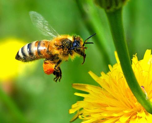 Les abeilles et les fleurs : une histoire d'amour qui ne pourra jamais s'arrêter.