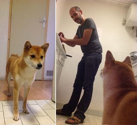 Enoki : un chien fidèle, dont l'amour va toujours à celui qui cuisine.